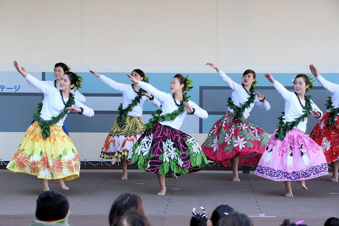 hawaiian 13