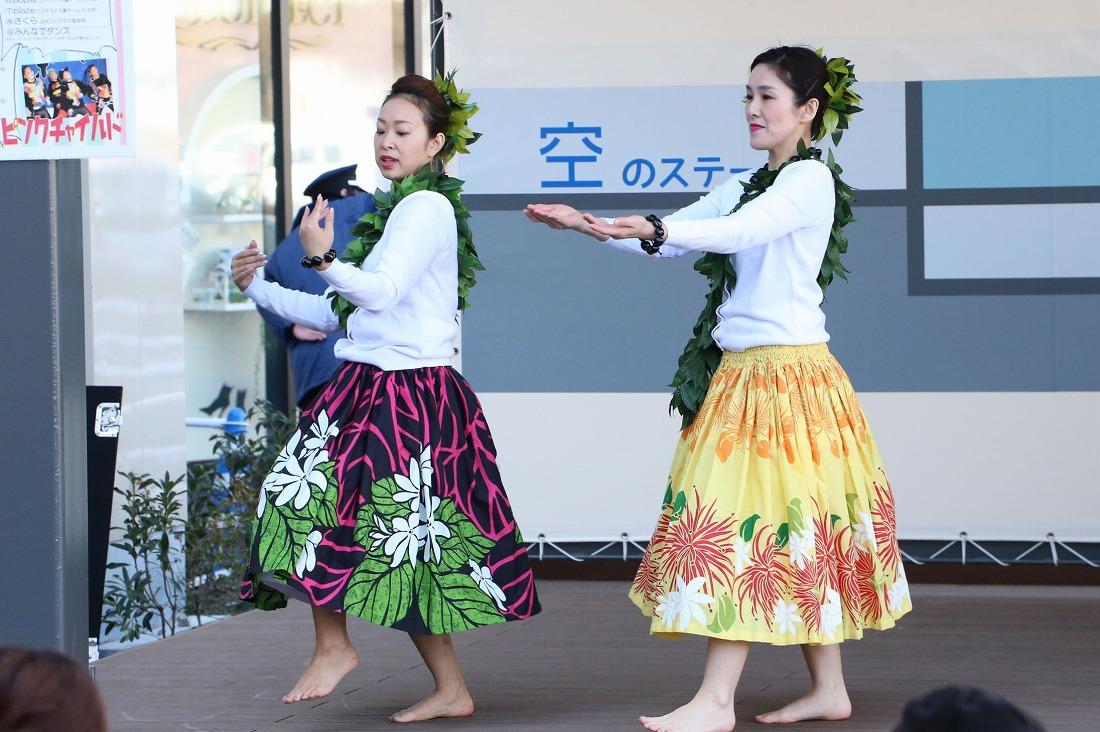 hawaiian 24