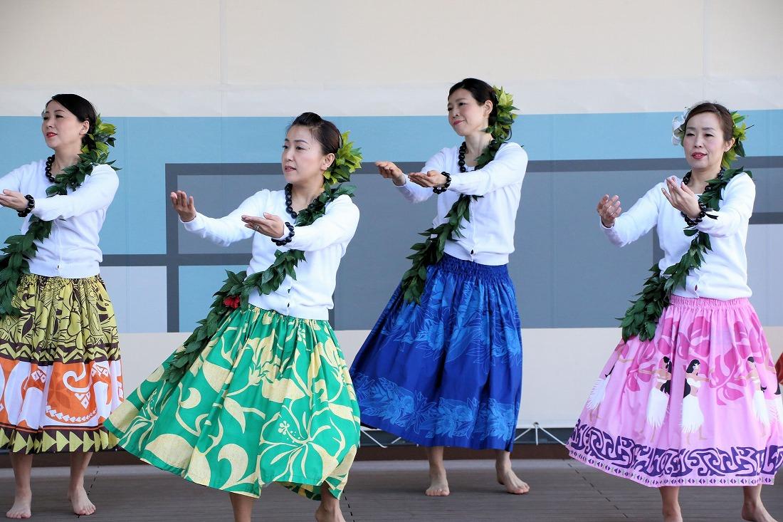 hawaiian 33