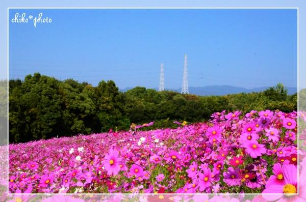 photo689.jpg