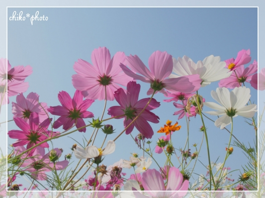 photo690.jpg