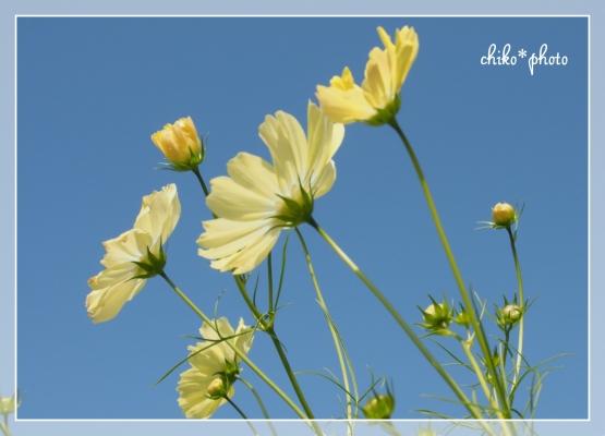 photo691_1.jpg