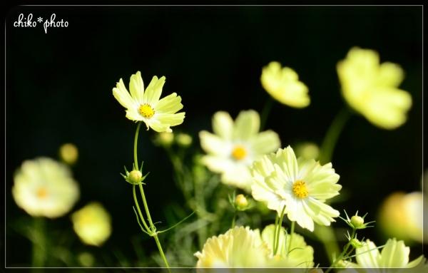 photo691.jpg