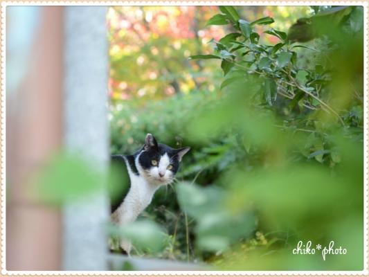 photo693_2.jpg