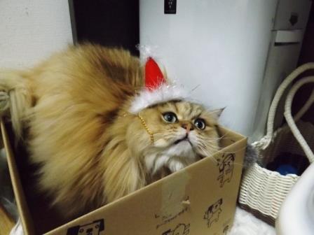 レオンくん (3)
