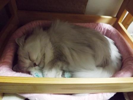 マリーちゃん寝る (3)