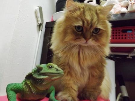 レオンとカメレオン