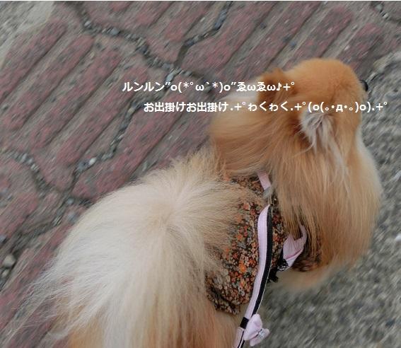 お出掛けCIMG3474