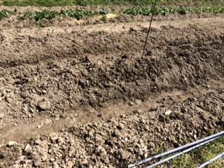 ジャガイモの床