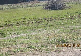 西瓜畑の草刈