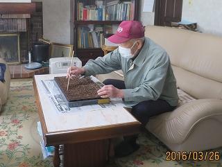 キャベツ種蒔き
