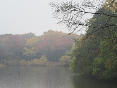20151108 (5)