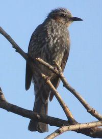 012野鳥2