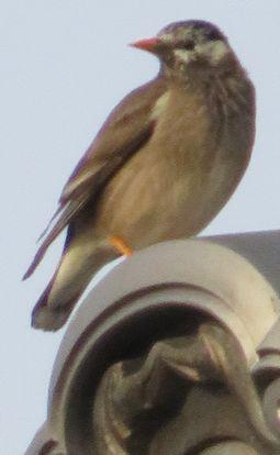 010野鳥2