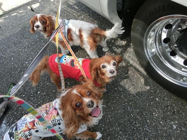 2016春・白浜・紀伊勝浦の旅 045