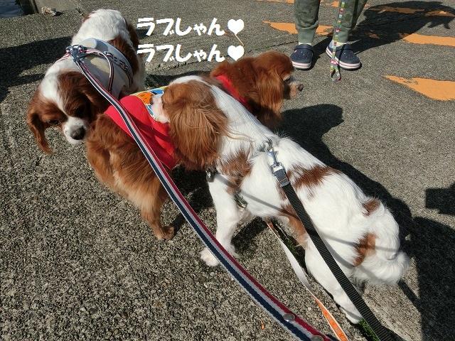 2016春・白浜・紀伊勝浦の旅 024