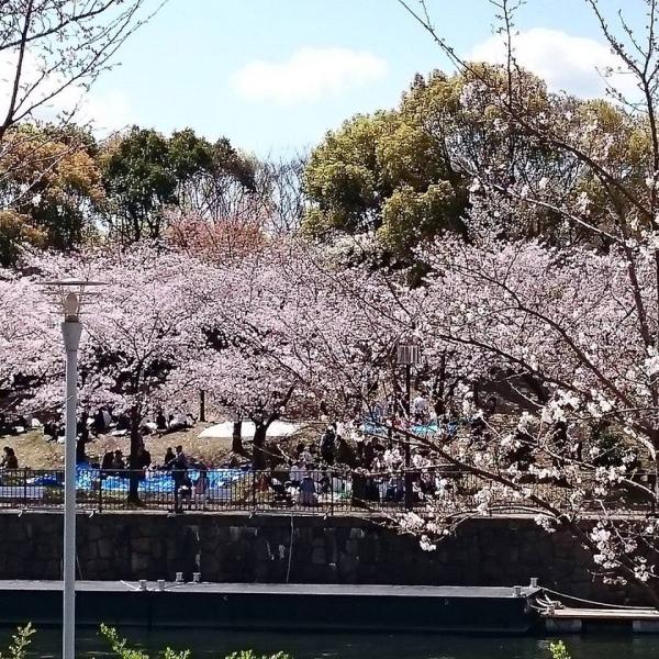 大阪城公園の川沿いの桜