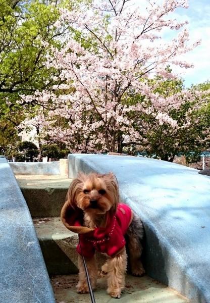 桜と凜・いつもの場所で