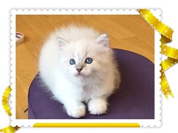 ポムちゃんIMG_4044