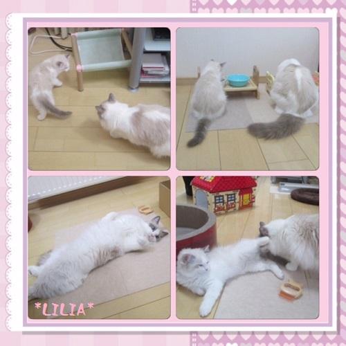 Cリリア20151108IMG_4107