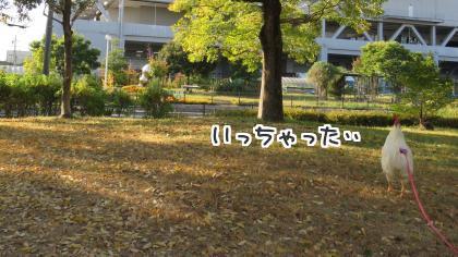 二太2015/10/28-1