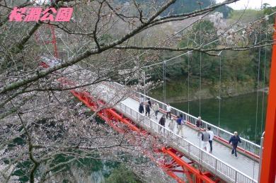 桜淵公園2016-5