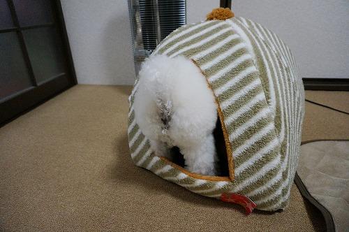 冬ベッド4