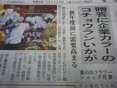 東愛知新聞 青い胡蝶蘭 豊川 花屋 花夢