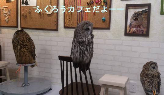 ふくろうカフェ