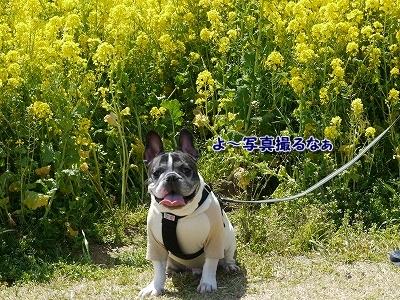 花さじき1 (1)