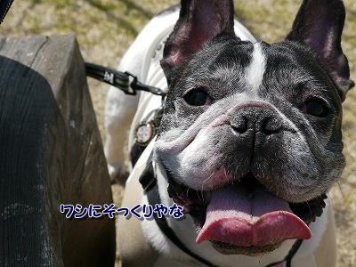 花さじき1 (5)