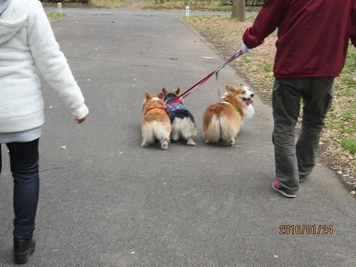 みんなでお散歩-2