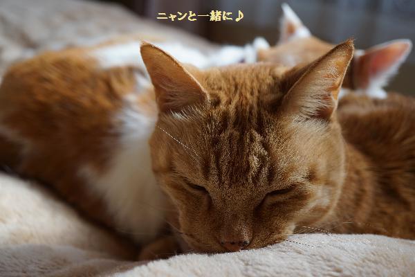 cyakomo40116.jpg