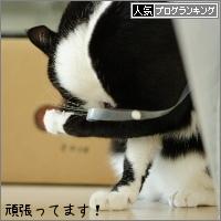 dai20160315_banner.jpg