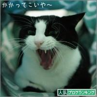 dai20160329_banner.jpg