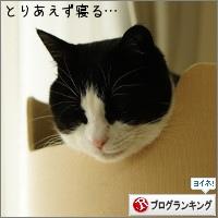 dai20160331_banner.jpg