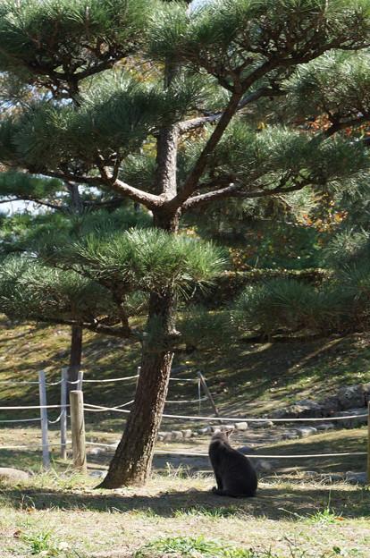 松の木とニャンコ