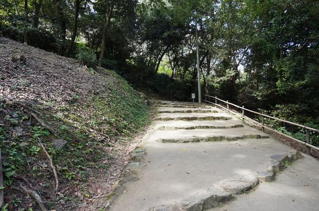 緩やかな坂道