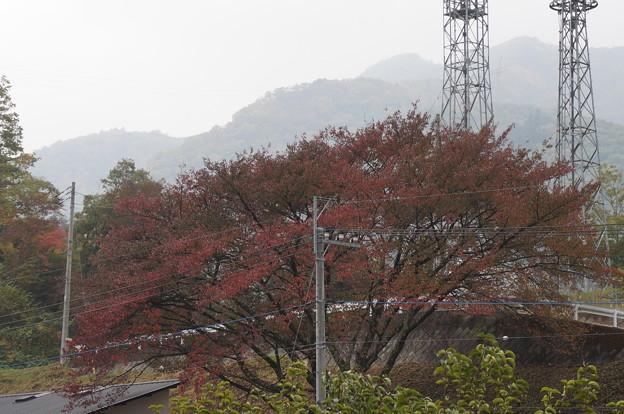ベランダから見える桜の木