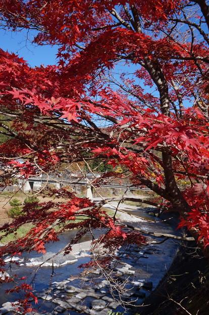 川と真っ赤な紅葉
