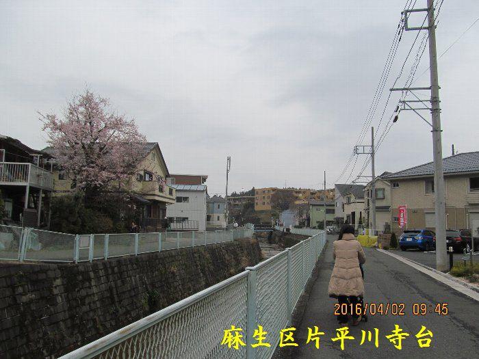 20160402sakira02.jpg