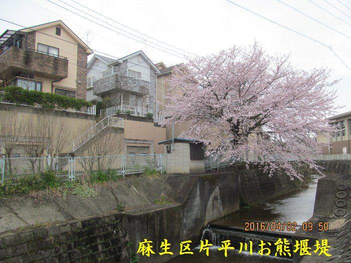 20160402sakira03.jpg