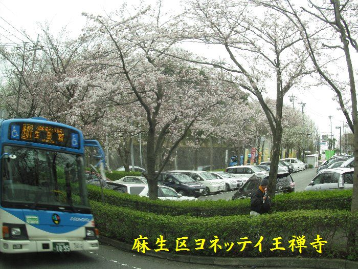 20160402sakira04.jpg