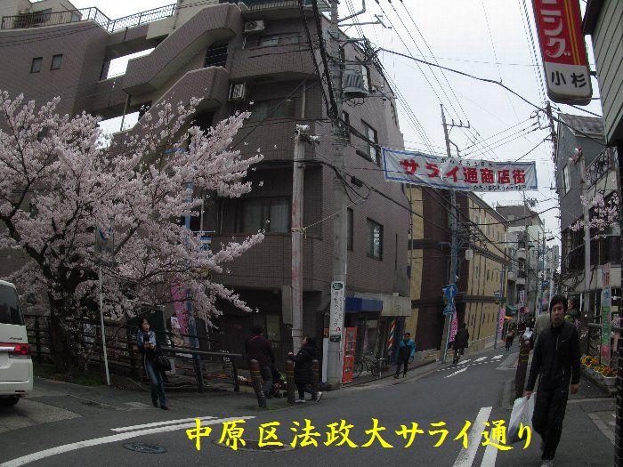 20160402sakira05.jpg