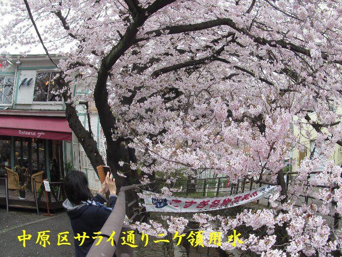 20160402sakira07.jpg