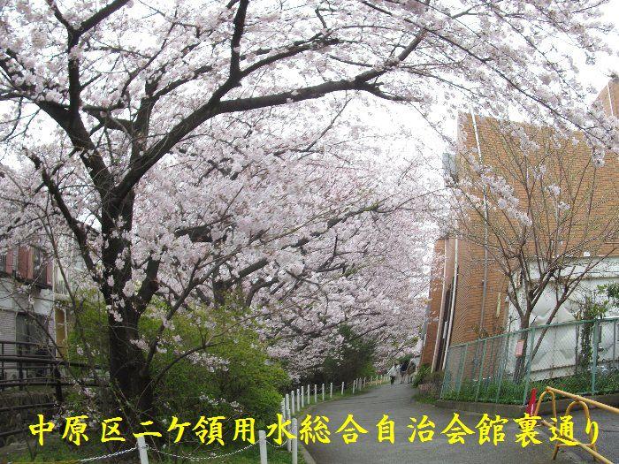 20160402sakira08.jpg