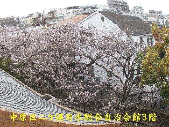 20160402sakira09.jpg
