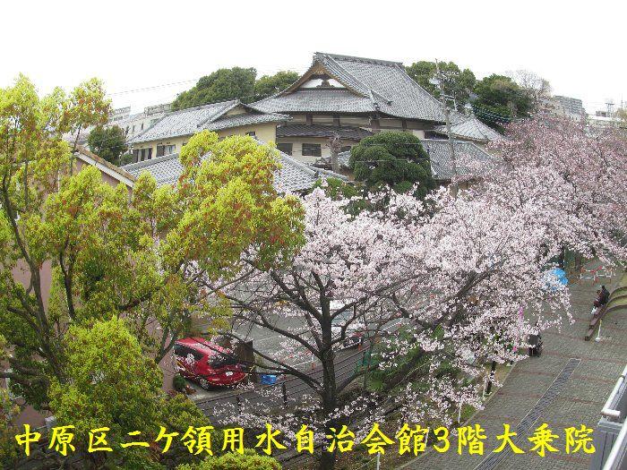 20160402sakira10.jpg