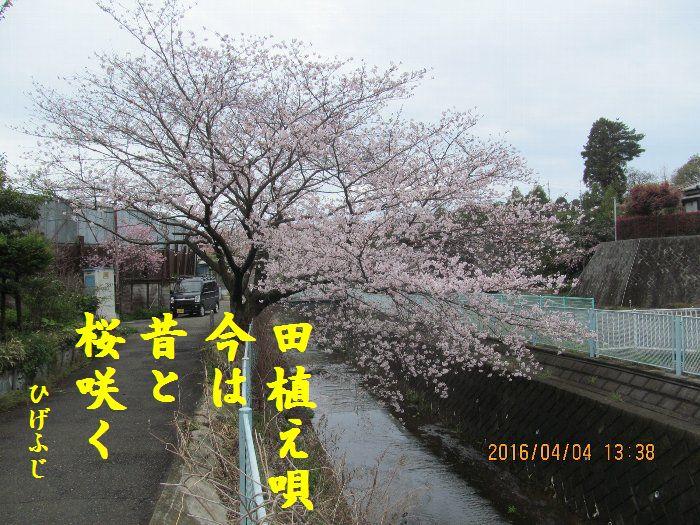 20160404kata01.jpg