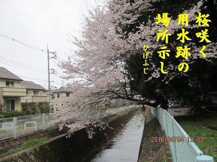 20160404kata02.jpg